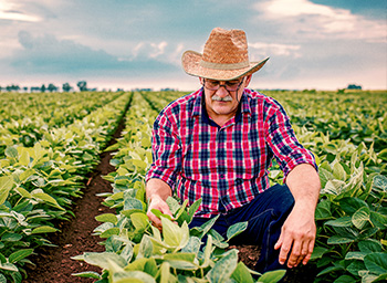 Discover agricultural jobs